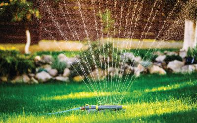 How Long to Water Your Lawn